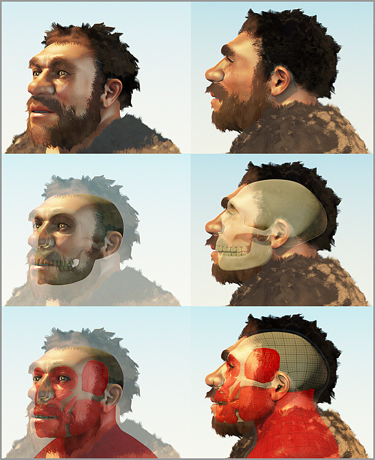 ATOR: Facial reconstruction of a Neanderthal