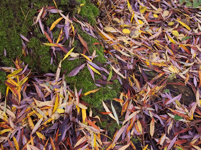 Multi coloured willow leaves around tree base