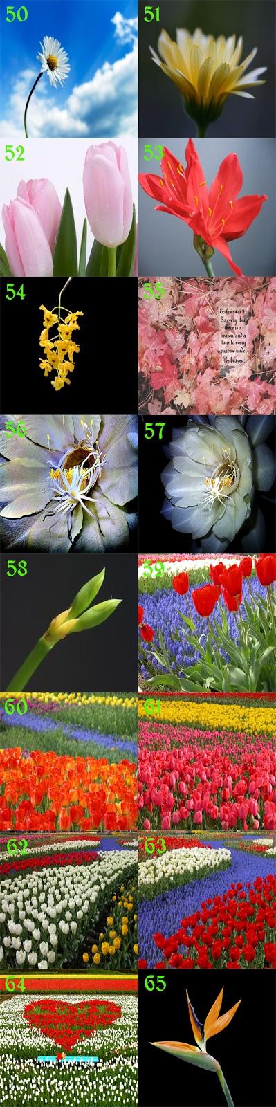 gambar bunga bunga