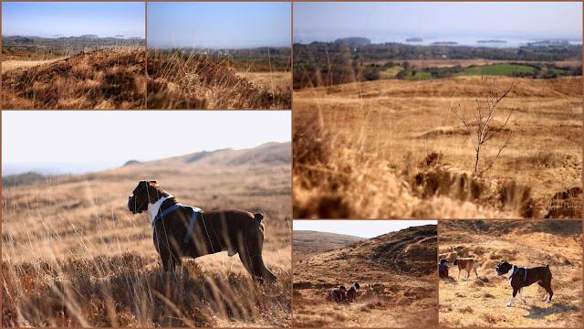 nature images collage, dry grasses, Ireland , Connemara