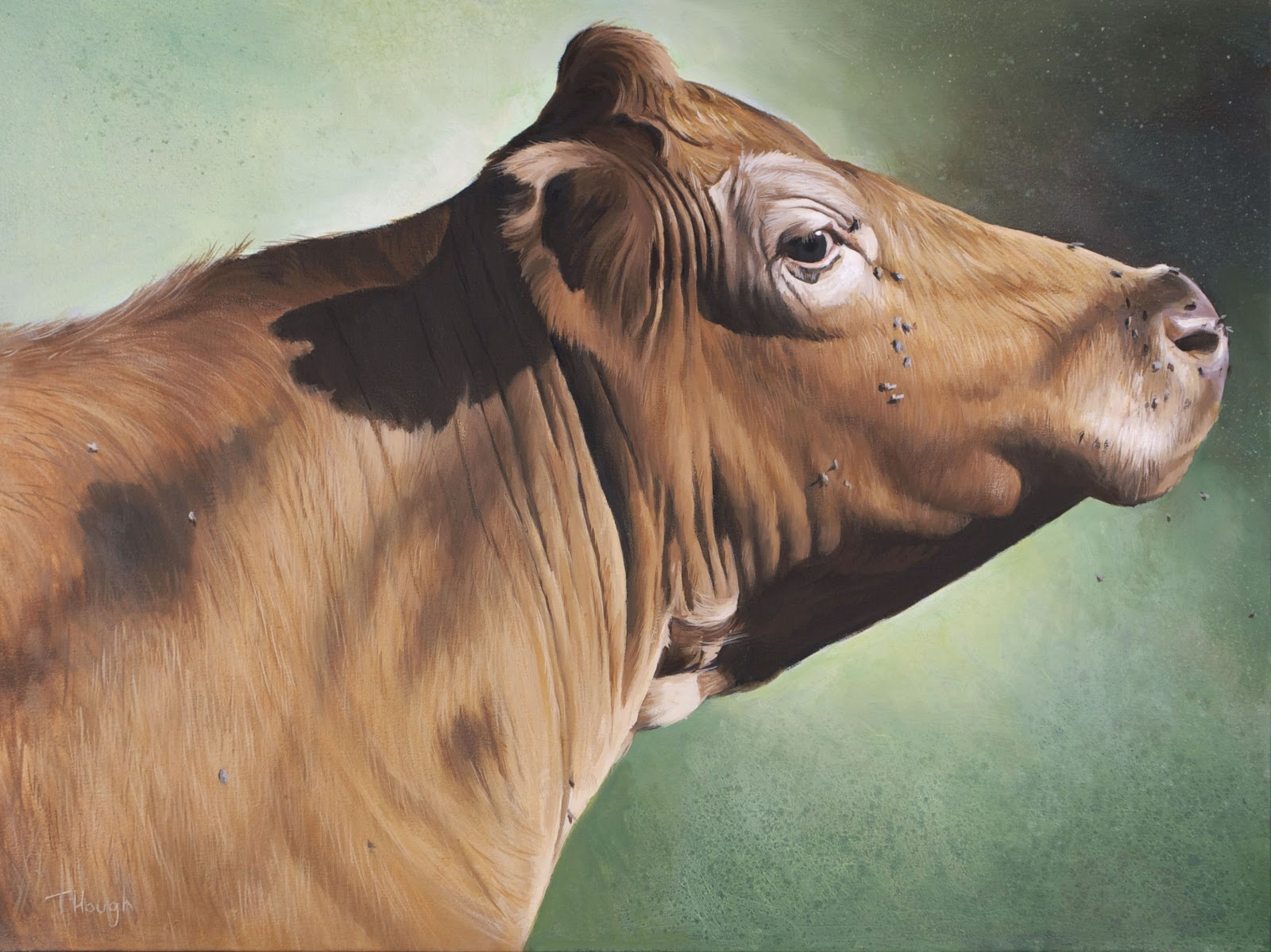 essay on cows The cow is a domestic animal which is found all over the world it has four legs, two horns on its head, and a long tail its body is covered with soft hairs its.