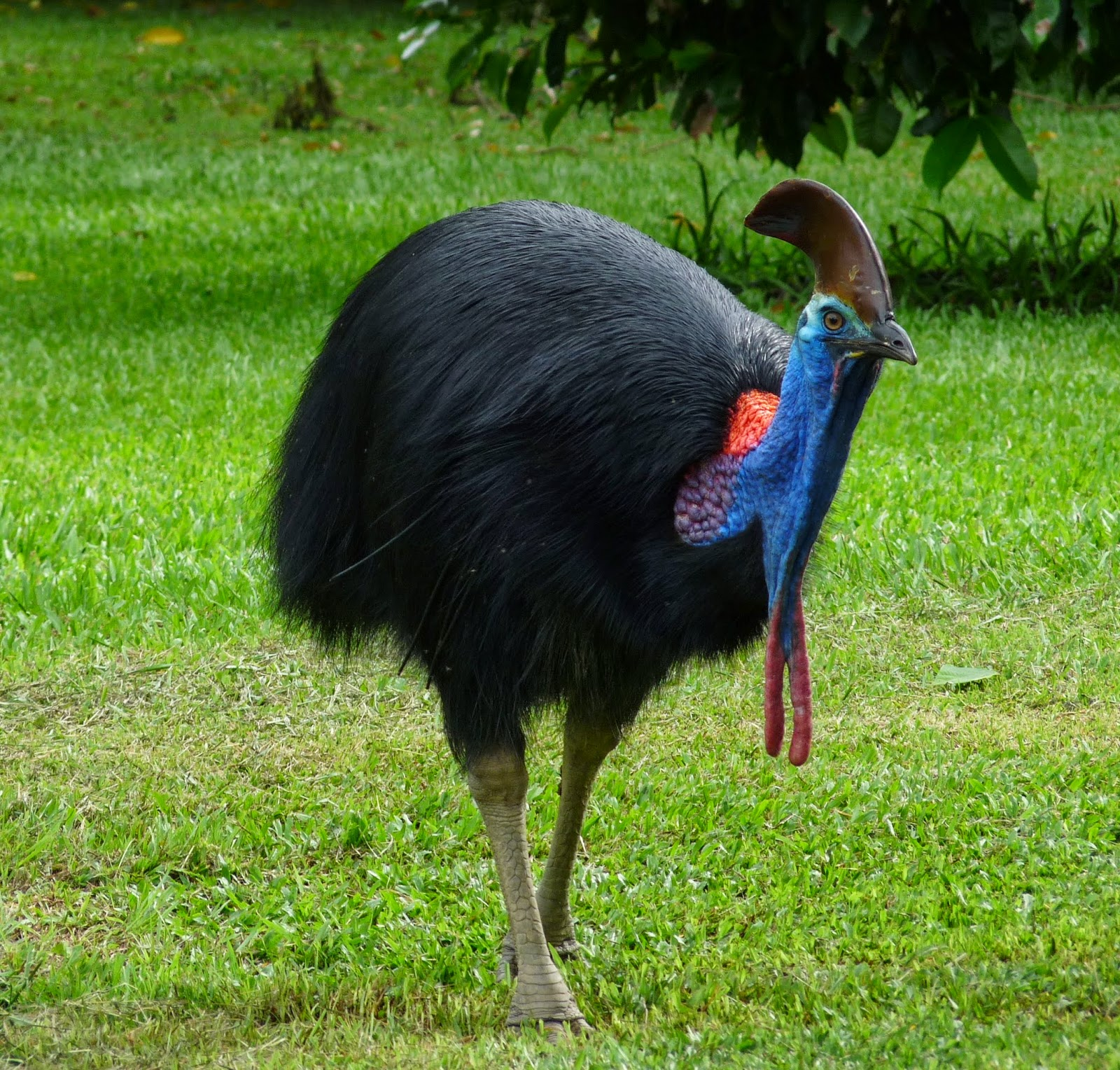 australia s dangerous animals journey of a backpacker