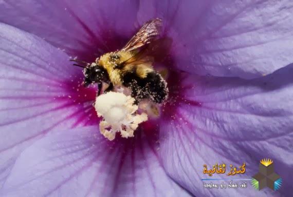 النحل يستطيع التعرف على الوجه