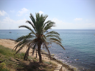 Lonely Palmtree on Tarragona Rocky Beach - Spain