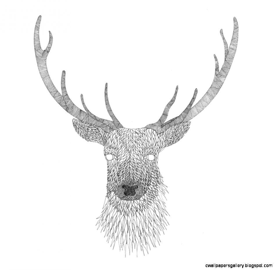 Deer Head Drawings Tumblr Pics For > Tumblr D...