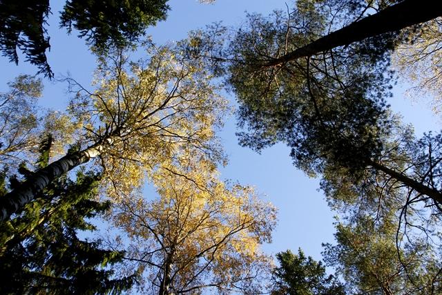 Puiden latvat