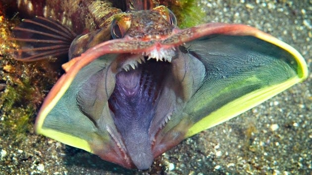 bizarre-sea-creatures-1