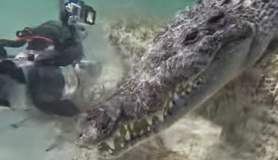 Θα κολυμπούσατε ποτέ τόσο κοντά σε κροκόδειλο;
