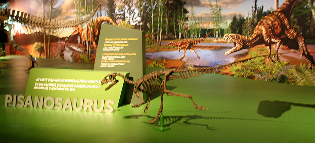 Louisville fossils and beyond eoraptor pisanosaurus and Dinosaur museum ohio