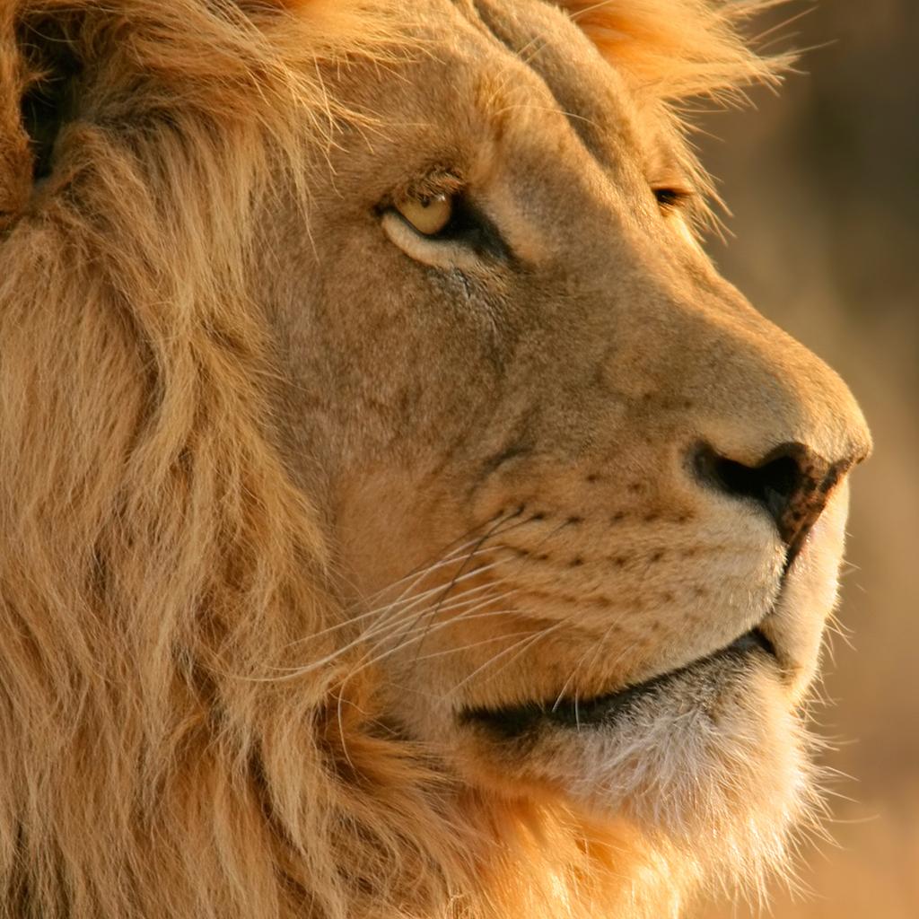 http://3.bp.blogspot.com/-Lca0EbuslQ8/TdQRcVu4FCI/AAAAAAAAAmk/DWldOrw4dME/s1600/Lion.jpg