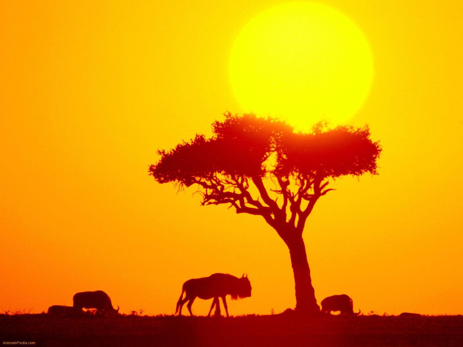 http://3.bp.blogspot.com/-Lcg1t1P5Sgs/TcM09_ZigFI/AAAAAAAABPM/s-un45Q4HSY/s1600/African-Safari-Wallpaper_0605201102.jpeg
