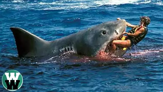 Αυστραλία: 17χρονος δέχεται επίθεση από μεγάλο λευκό καρχαρία (προσοχή σκληρό βίντεο)