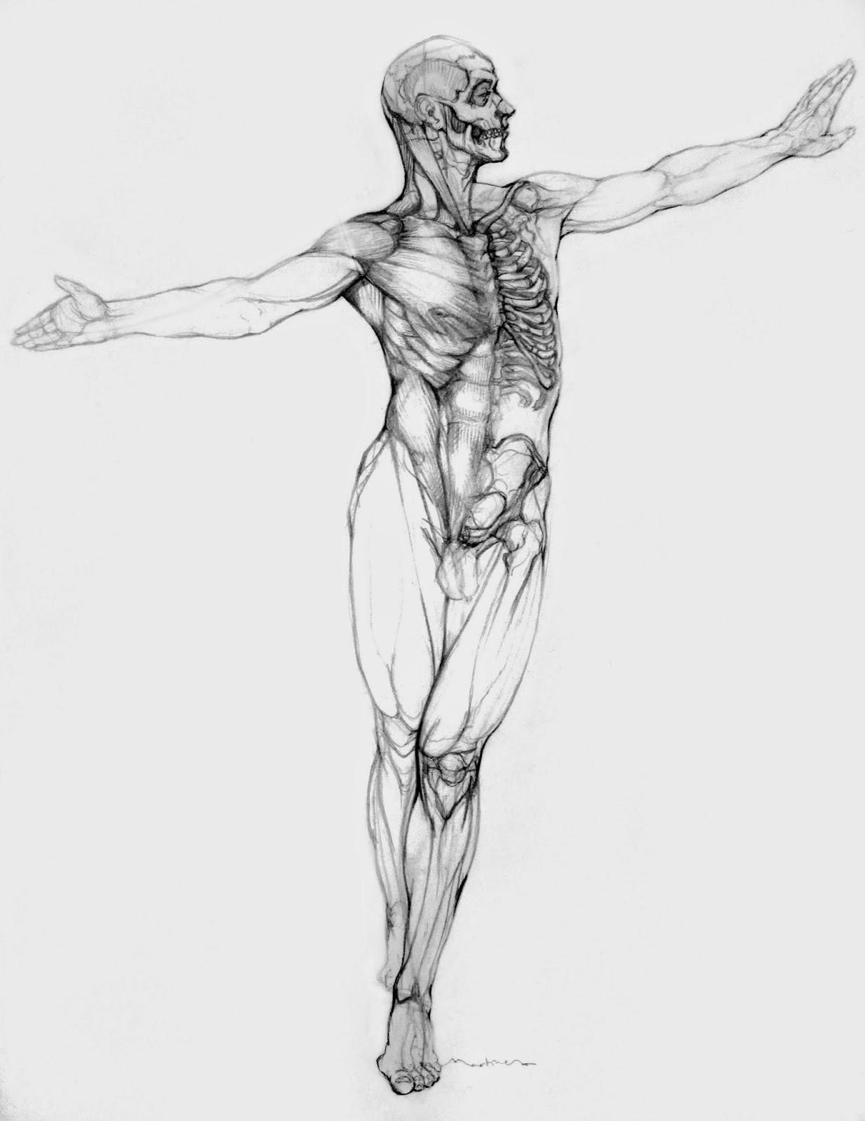 Famoso Dibujos De La Anatomía Muscular Festooning - Anatomía de Las ...