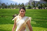 Hansika Motwani in saree navel stills