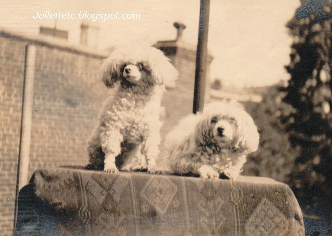 Poodles of New York 1917 http://jollettetc.blogspot.com
