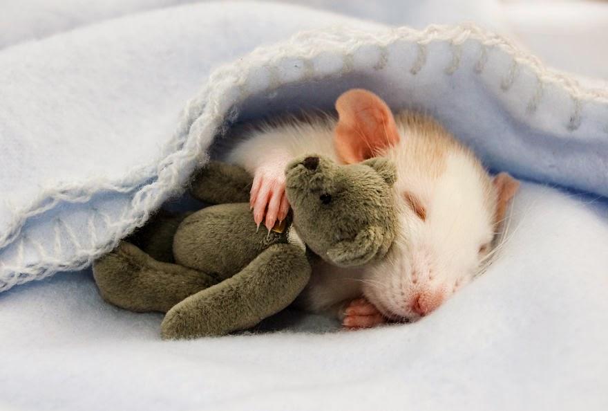 rato a dormir