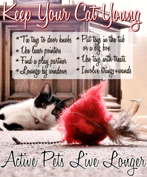 Maintain your cat's health at any age with structured play times and toys that foster their natural instinct to hunt and play at night!