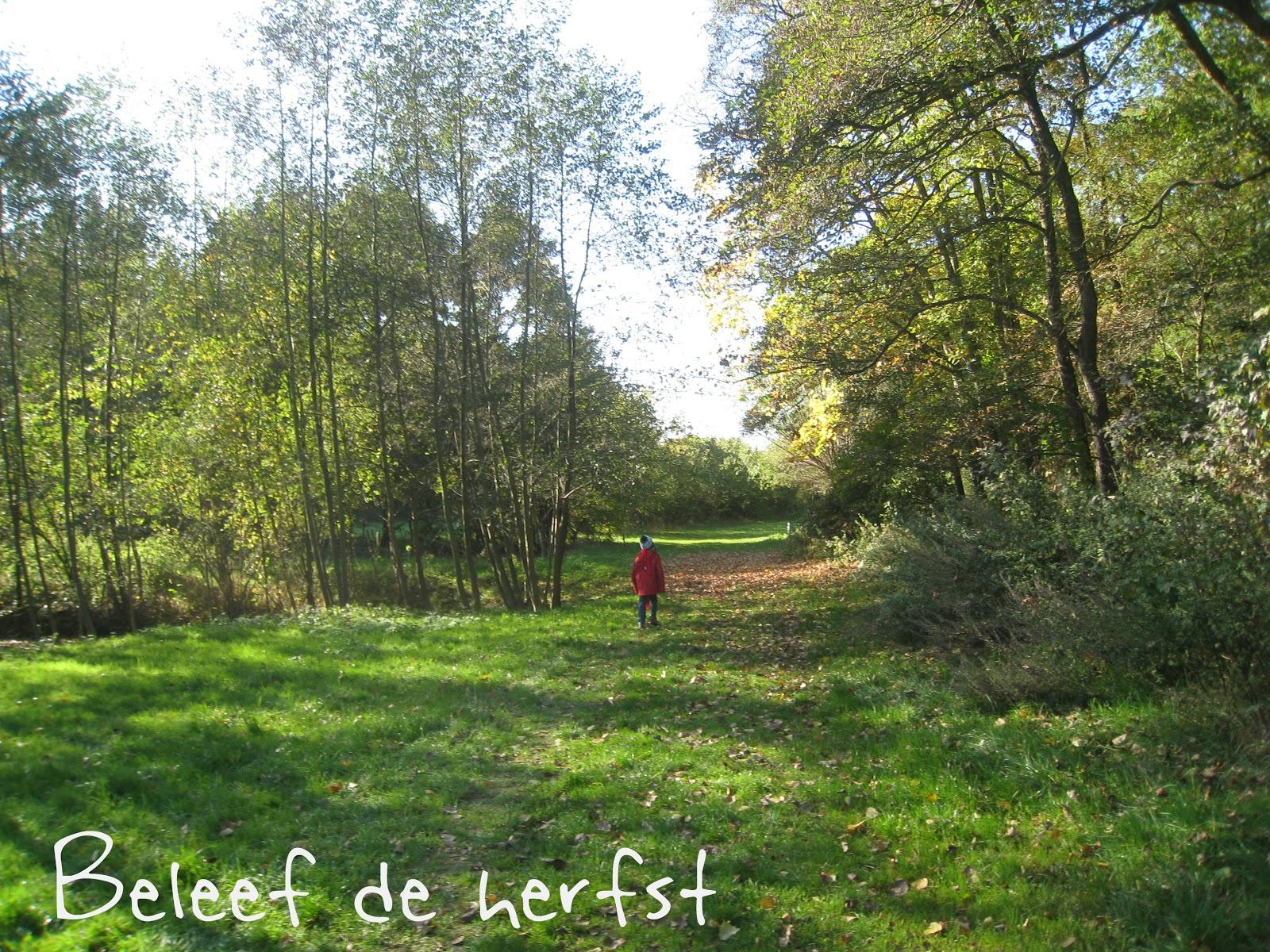 Beleef de herfst tijdens een boswandeling