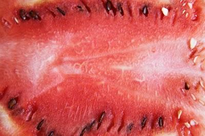 Καρπούζι-η καλοκαιρινή μας τροφή