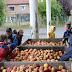 Fabrication de jus de pommes.