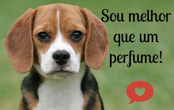 cruelty free testes em animais