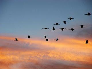 Ptice selice slike besplatne pozadine za desktop download