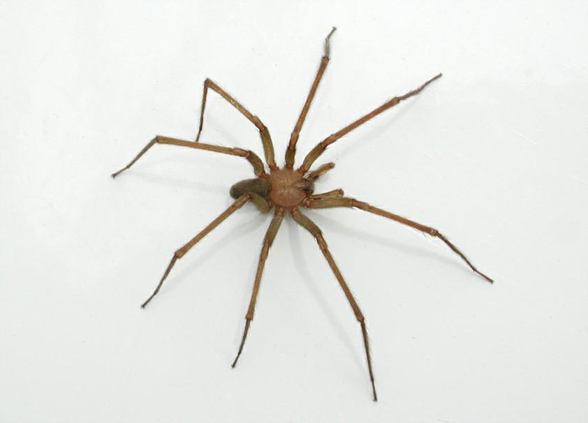 El gran compendio la ara a de rinc n parte 1 - Insectos en casa fotos ...