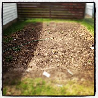 just planted vegetable garden