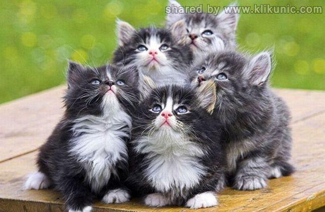 http://3.bp.blogspot.com/-Leet58ElBSE/TXlonPrzGRI/AAAAAAAAQzY/oVyeSFtRD5U/s1600/these_funny_animals_635_640_09.jpg