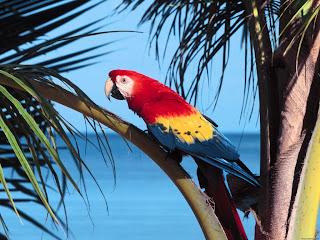 muhteşem papağan arkaplanı çok renkli papağan resmi