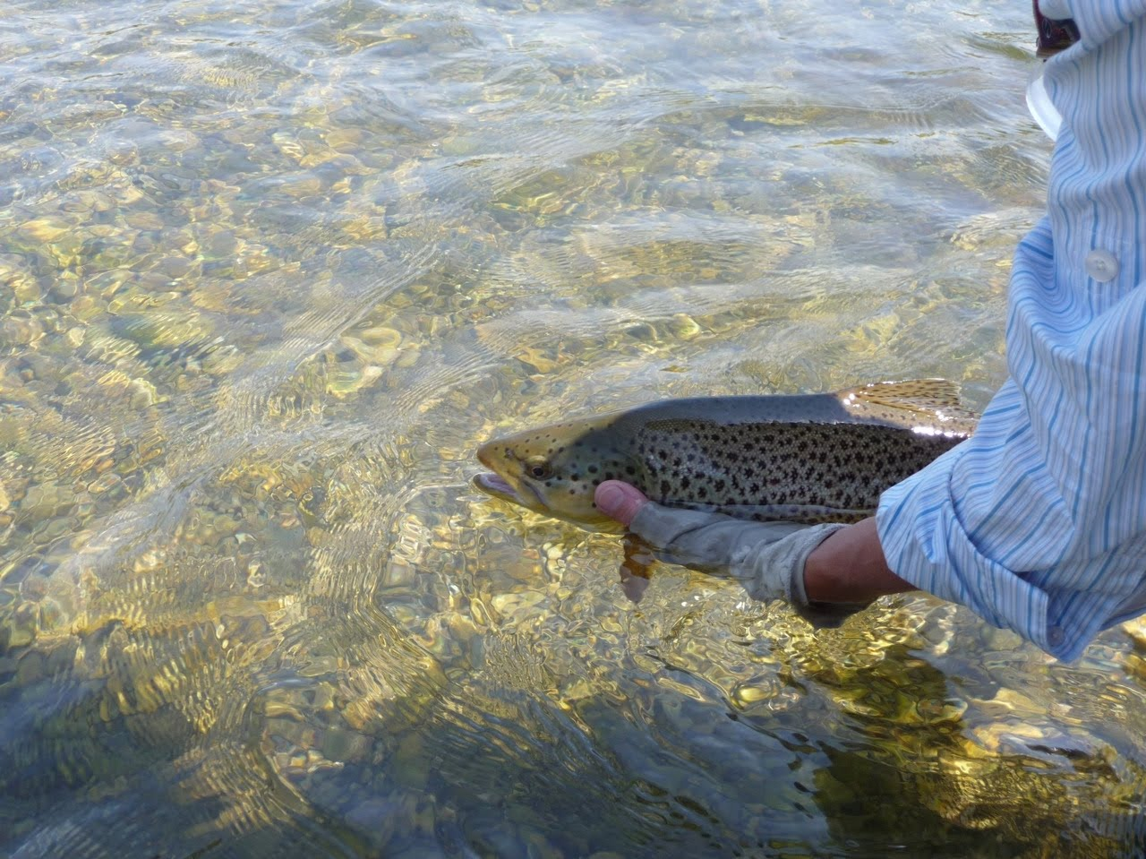 idaho nature notes silver creek fishing report july 20