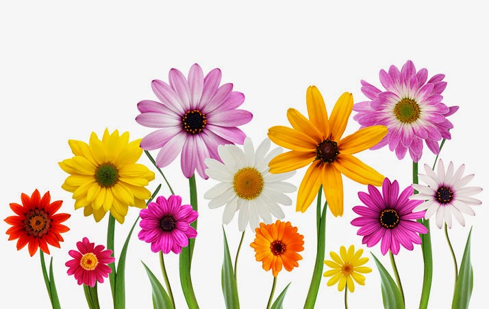 flower background with structure - photo #42