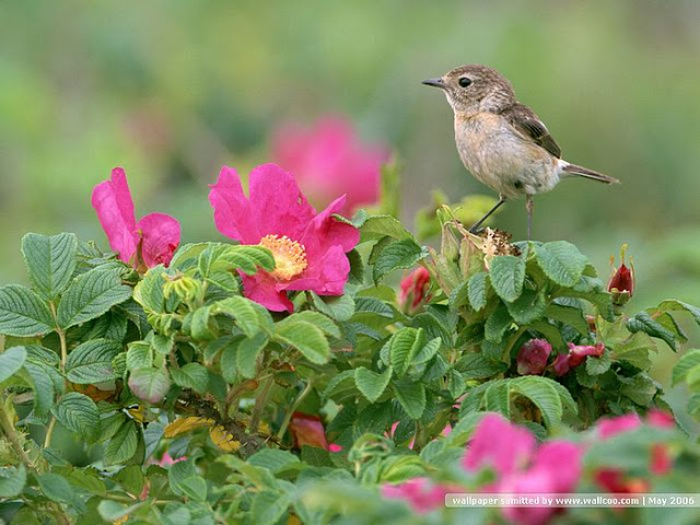 beautiful bird wallpaper