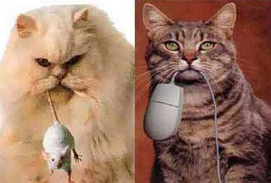 Cat has real mouse