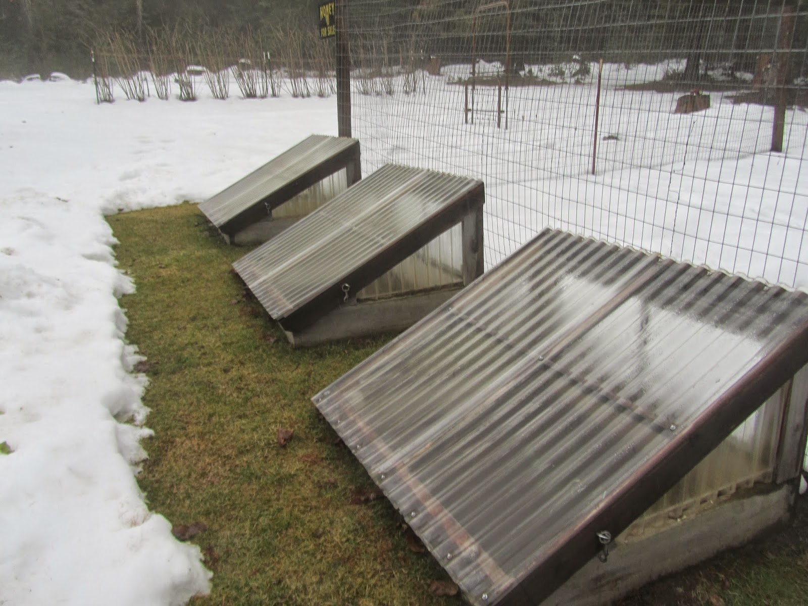 Cold Frames melting out from the snow in  Zone 5 Garden