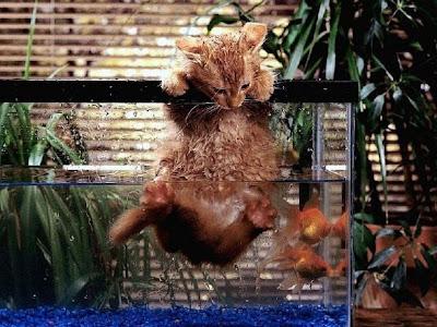 Funny Animals Cat Photos 3