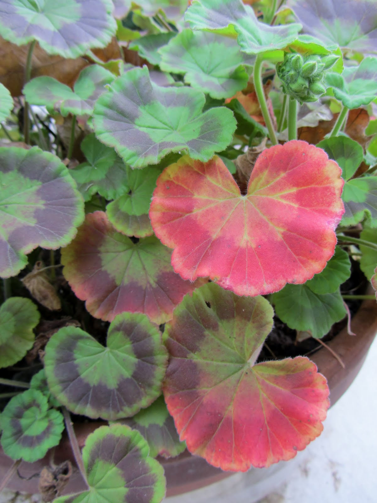 Moments Of DelightAnne Reeves Pink Geraniums Leaves
