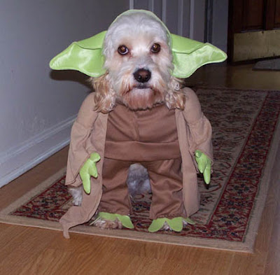 Perro disfrazado del maestro Yoda