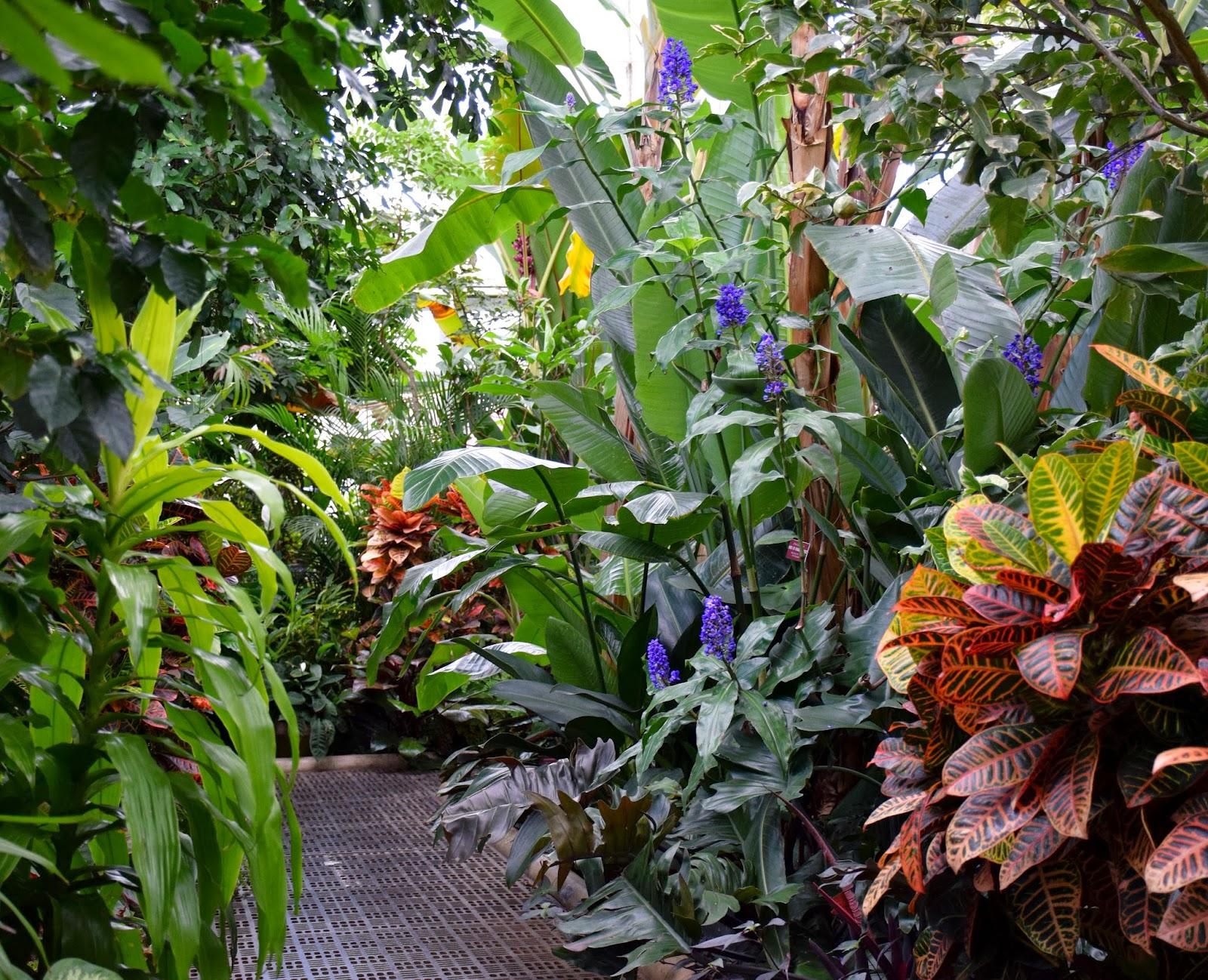Tropical House Plants List Tropical House Plants List