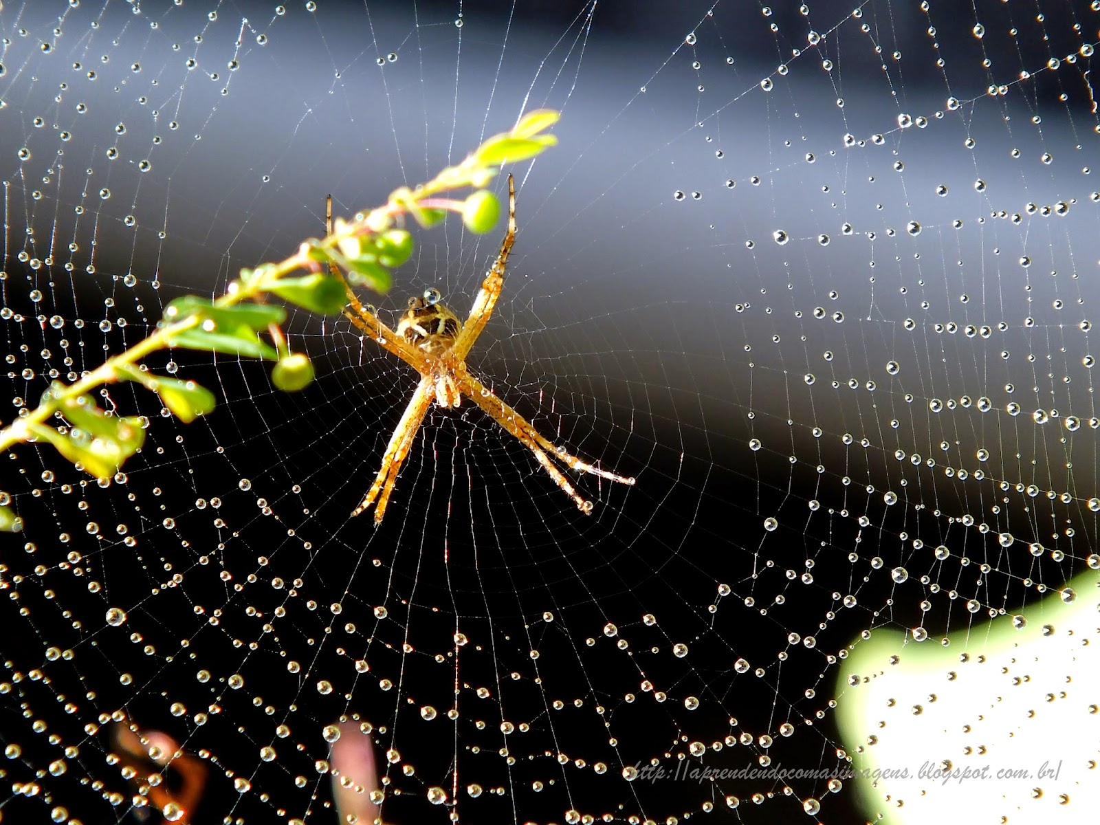 """""""Na Biodiversidade, tento encontrar uma evasão de um labirinto  cujo o qual, faz com que meus sentimentos exalam em meu humilde olhar,  a essência da Vida""""  """" A ausência, pode parecer presente,  mas a lembrança eterniza  em cada período deste Amanhã até ao Por do Sol"""" - http:/aprendendocomaasimagens.blogspot.com/2014/09/nossa-existência-aprisionada-em-um-html"""