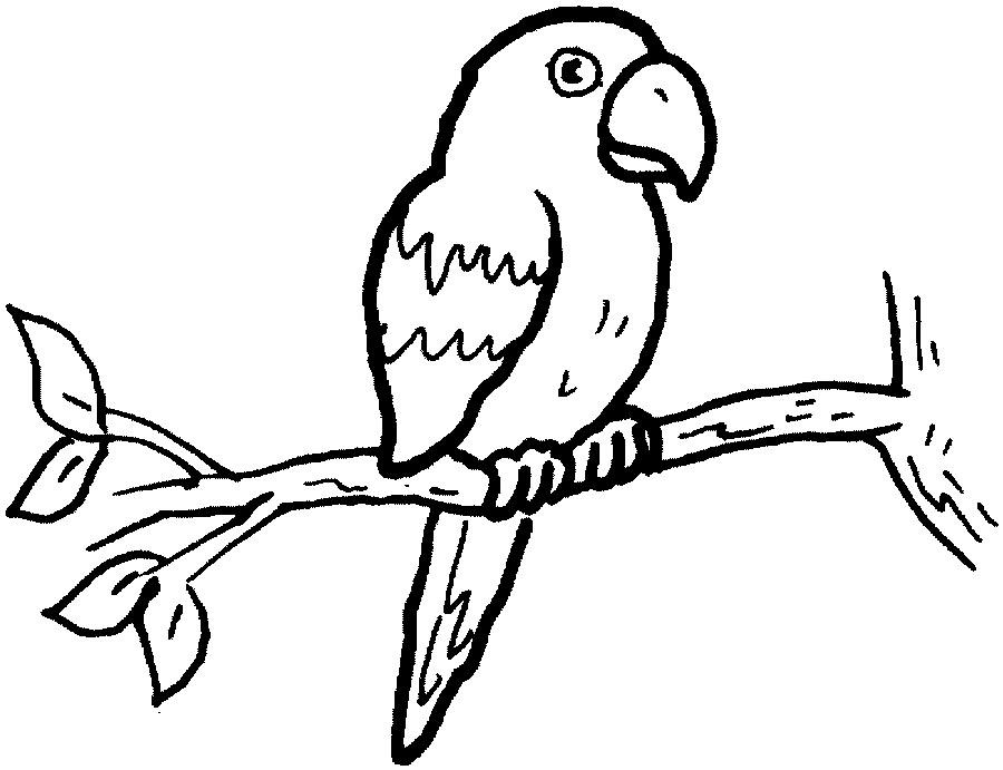 Imagens de papagaios e araras para imprimir e colorir - Educação ...