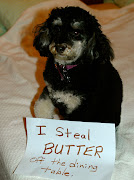 A Dog Shaming web site has been established where dogs are being forced to .