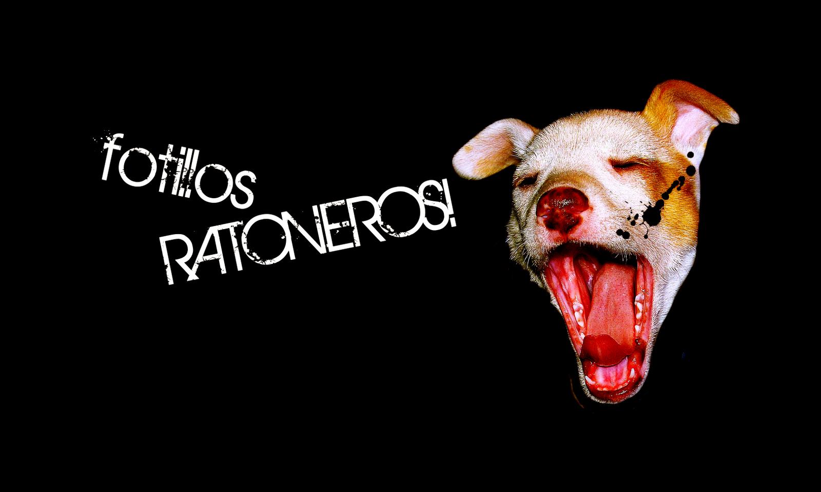 FOTILLOS RATONEROS