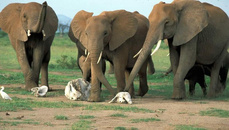Beautiful Animals Safaris: Elephant Animal Safaris