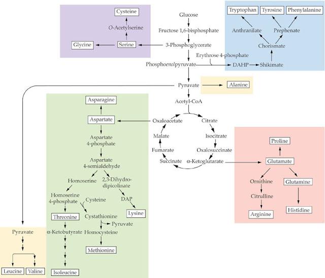 Die Biochemie und industrielle Nutzung von Naturstoffen Oliver ...