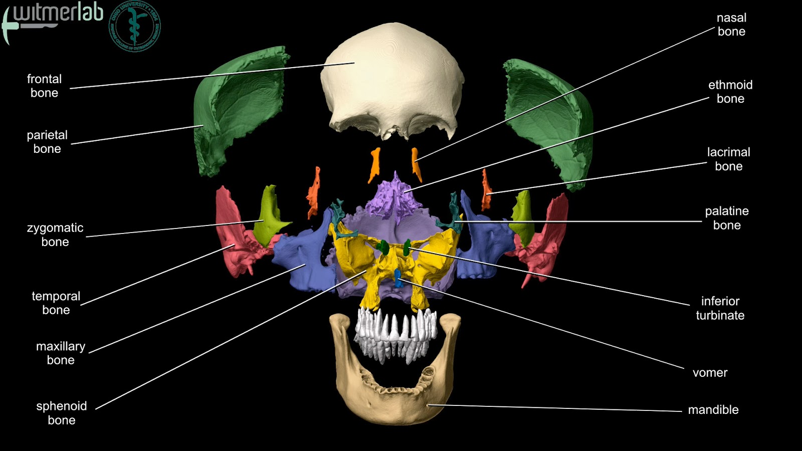 craniosacral therapy for dental work and tmj dysfunction
