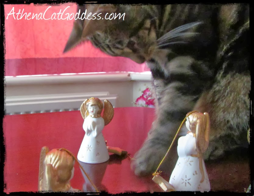 Cat intrigued by Christmas ornaments