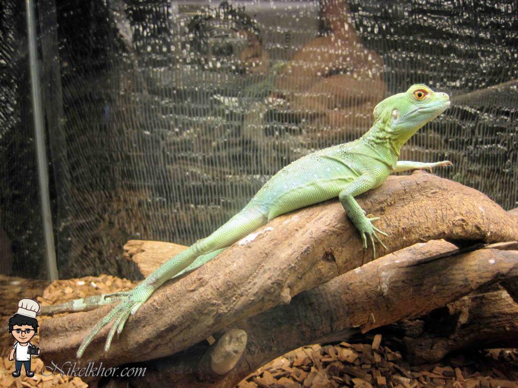 Reptile 94