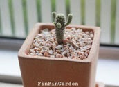http://finfingarden.blogspot.com/2014/12/mammillaria-cactus-cacti-nature.html