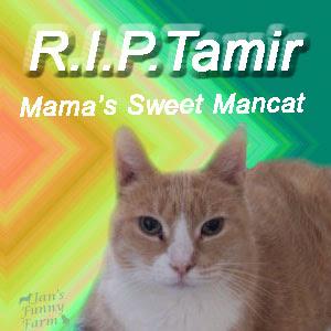 RIP Tamir